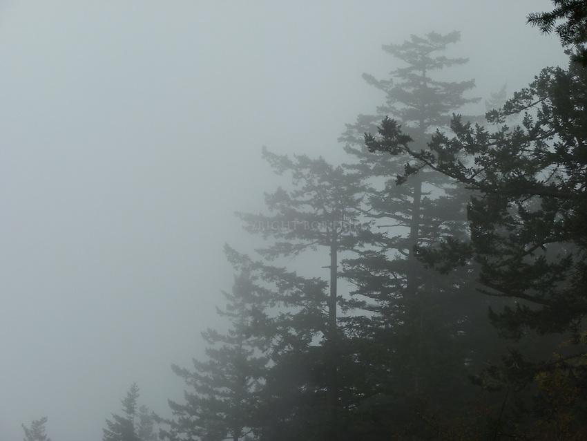 Scenes on Turtleback Mountain, Orcas Island, near Colt's campsite.