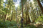 Kyle Smith, forester, Nature Conservancy, Washington Chapter, Ellsworth Creek Preserve, forest restoration, Emerald Edge Project, Willapa Bay, Pacific County, Washington Coast, Washington State, Pacific Northwest, United States,