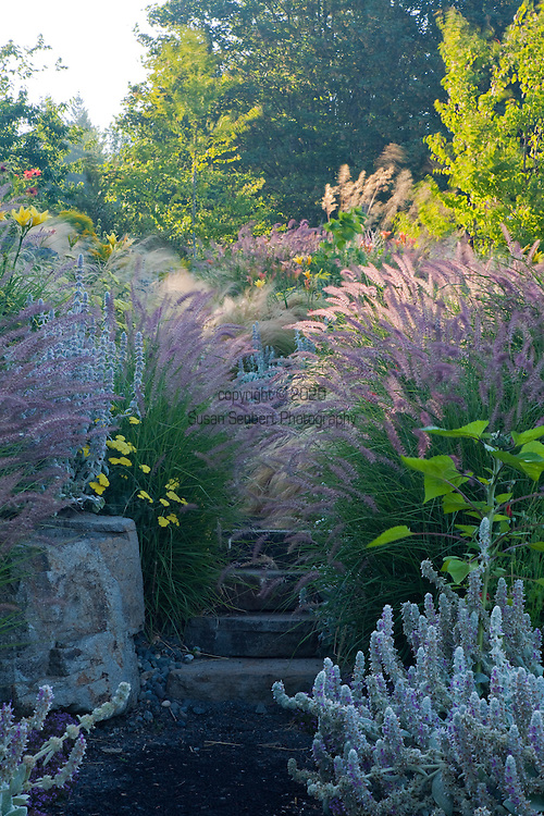 """Decorative grasses like Pennisetum orientale """"Karley Rose"""" and nasella tenuissima """"Mexican Feather Grass"""" line the natural stone steps in the drought tolerant hillside garden behind the outdoor fireplace."""