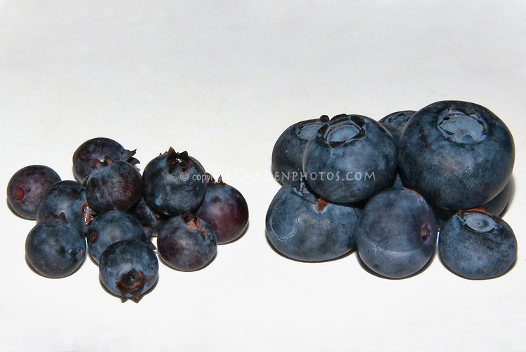 Blueberry Wild & Cultivated Side by Side comparison