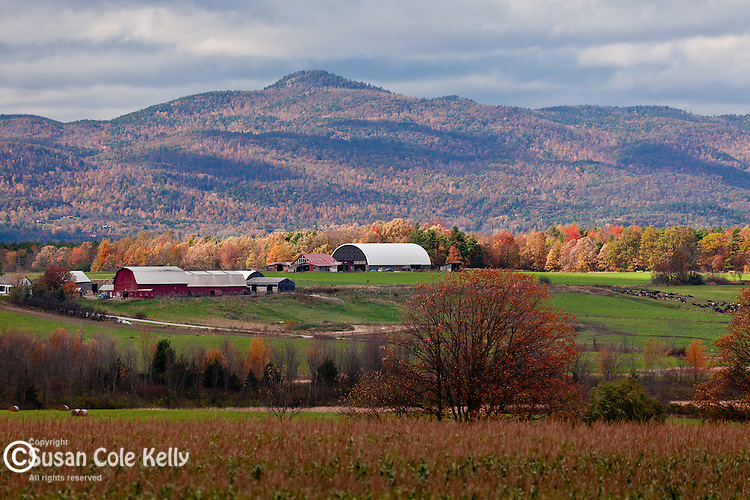 Fall foliage in Bridport, VT, USA