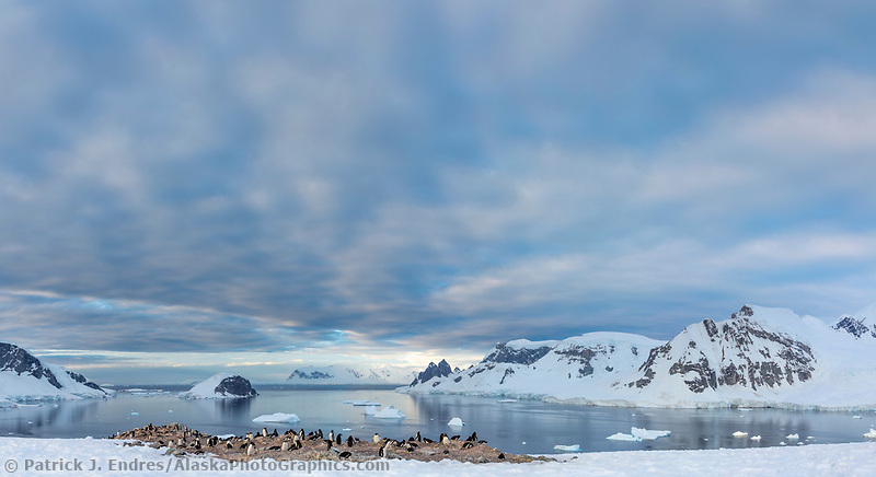 Danco Island, Antarctic peninsula
