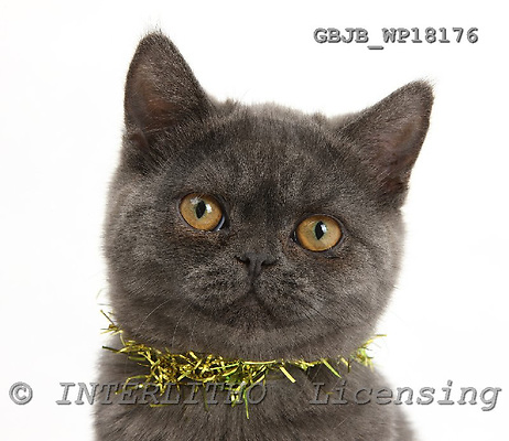 Kim, CHRISTMAS ANIMALS, photos, GBJBWP18176,#XA# stickers