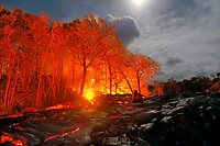 Full moon, trees on fire, Large Pahoehoe lava flow in Royal Gardens subdivision covers Paradise st, Kilauea volcano, east of Hawaii, USA Volcanoes National Park, Big Island of Hawaii, USA