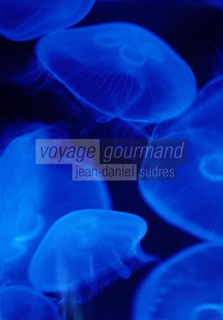 Europe/France/Bretagne/56/Morbihan/Vannes: Méduses à l'aquarium de Vannes