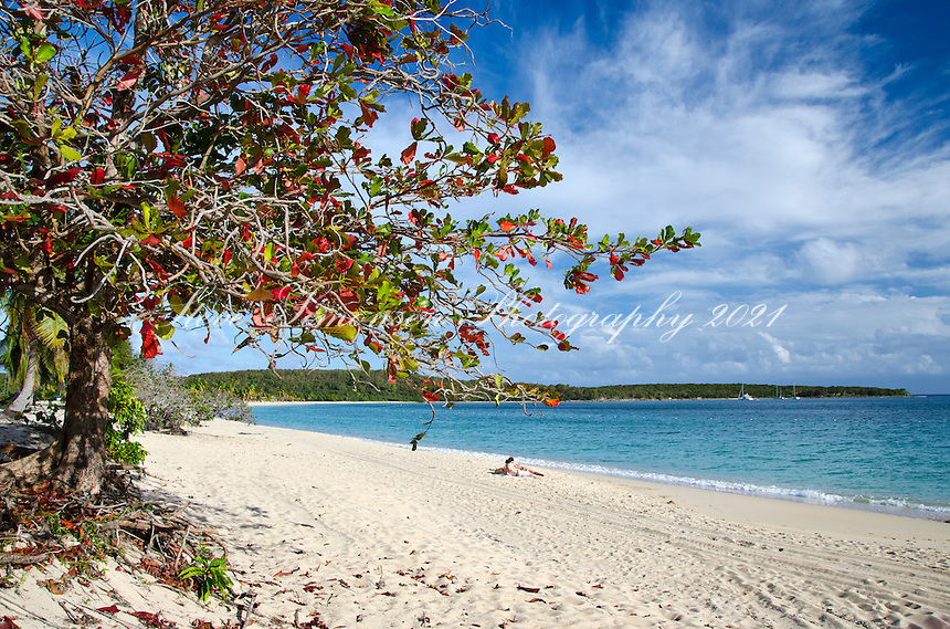 Almond Tree<br />