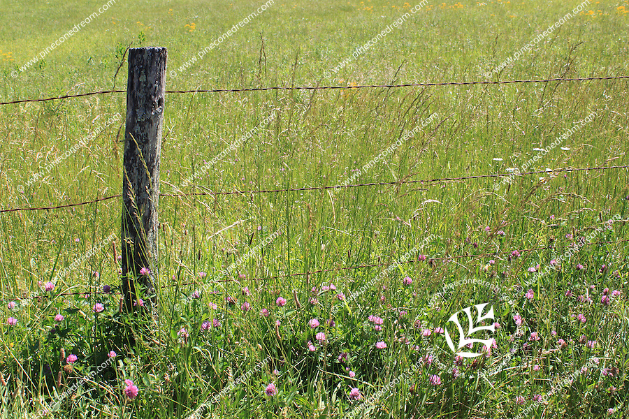 Wild grass and flowers grown near a barbed wire fence at cades cove, The great smoky mountain national park, Tennessee, USA