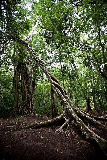 Arbol de amor (Love tree) at Mirador archeological site.