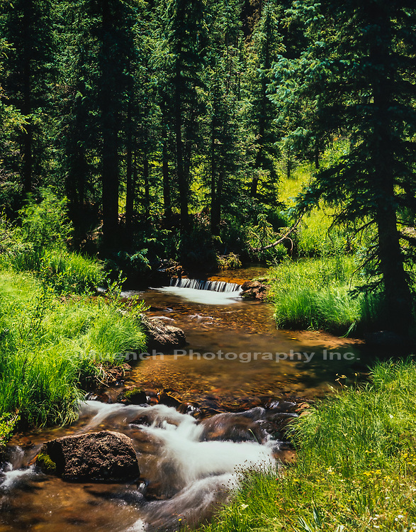 West Fork of the Little Colorado River,White Mountains,Arizona