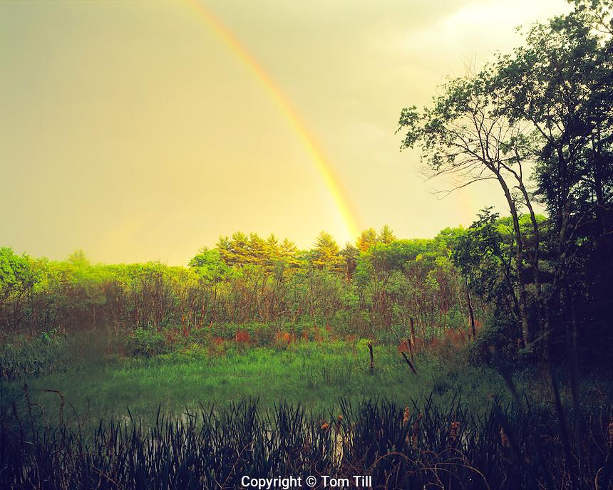 Rainbow over forest, Cleaveland Farm State Forest, Massachusetts