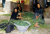 Women selling greens on a street in Cairo, Egypt.