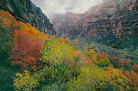 Fremont cottonwood &amp; bigtooth maples<br />
