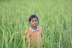 A girl walks through a rice field in the Cambodian village of Pheakdei.