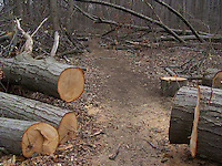 Damage from SuperStorm Sandy, Tallman Mt. State Park