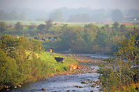 Misty morning scene, Whitewell, Lancashire....Copyright..John Eveson, Dinkling Green Farm, Whitewell, Clitheroe, Lancashire. BB7 3BN.01995 61280. 07973 482705.j.r.eveson@btinternet.com.www.johneveson.com