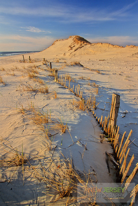 Coastal Sand Dunes & sand fencing, Island Beach, New Jersey