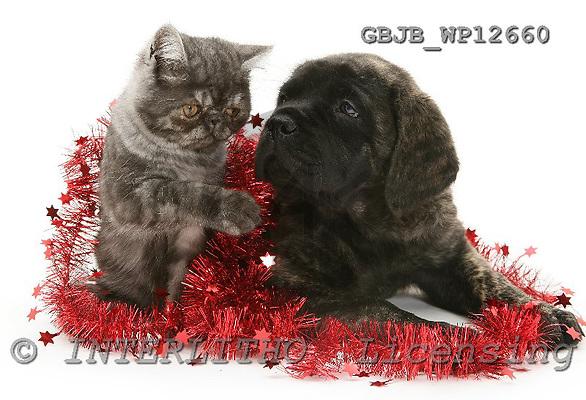 Kim, CHRISTMAS ANIMALS, photos, GBJBWP12660,#XA# stickers