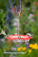 01162-12412 Ruby-throated Hummingbirds (Archilochus colubris) at feeder by flower garden, Marion Co.  IL