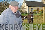 FEEDING: Michael O'Connor of Ballymcegogue,The Spa, who on his 86th birthday which was 25th March still feeds his pet donkey's.