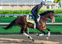 April 30, 2014: Derby contender Medal Count, trained by Dale Romans, exercises on the backside of the track at Churchill Downs during the Dawn at the Downs in Louisville, Kentucky. Logan Riely/ESW/CSM