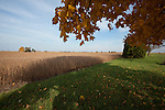 Iowa soybean field nearing harvest time.