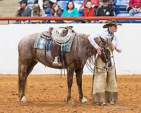 Mustang Magic 2014