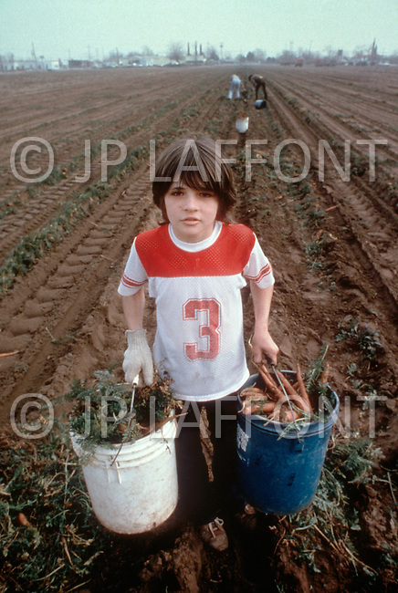 Young boy works on a farm in California -  Child labor as seen around the world between 1979 and 1980 - Photographer Jean Pierre Laffont, touched by the suffering of child workers, chronicled their plight in 12 countries over the course of one year.  Laffont was awarded The World Press Award and Madeline Ross Award among many others for his work.