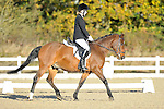 06/11/2016 - Unaffiliated Dressage - Brook Farm Training Centre