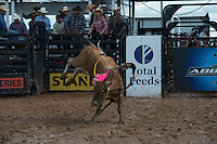 Davis Rodeo 4596 of Davis Rodeo Ranch/ Fogle during the American Bucking Bull, Incorporated event in Decatur, TX - 6.3.2016. Photo by Christopher Thompson