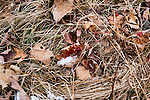White-tailed deer blood trail
