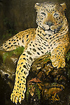 RARE commissioned a Dayurejo villager to paint this likeness of a Java leopard (Panthera pardus melas), mascot for the East Java campaign.