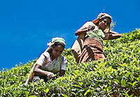 The  tea, the high altitude blue sky and the well dressed tea pickers on a steep slope are all elemental Sri Lanka. (Photo by Matt Considine - Images of Asia Collection)