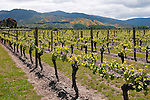 New Zealand, South Island, Marlborough, winery touring, tasting, and vineyards at Wairau Rivery Winery  Sauvignon Blanc and Pinot Noir wine. Photo copyright Lee Foster. Photo #126465