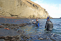 Snorkelers watching and photographing Sally Lightfoot Crabs (Grapsus grapsus) on rocks, Bartolome Island, Ecuador, Galapagos Archipelago
