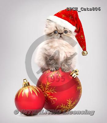 Xavier, CHRISTMAS ANIMALS, WEIHNACHTEN TIERE, NAVIDAD ANIMALES, photos+++++,SPCHCATS806,#xa#