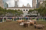 USA - Sheep-In-NewYorkCity - New York