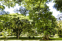 A unique group of tropical trees on the grounds of McBryde gardens near Poipu, Kauai, which are part of the 5 National Tropical Botanical gardens in the US.