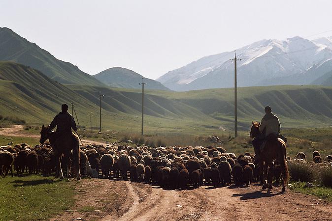 Der Weg zum Sommerlager. Im Tien-Shan-Gebirges an der Grenze zwischen Kasachstan und Kirgistan, treiben die letzten Nomaden Kirgisistans ihre Tiere auf die Sommerweiden. / The way to summer camp. In the Tien Shan mountains on the border between Kazakhstan and Kyrgyzstan, driving the last Kyrgyz nomads their animals to summer pastures.