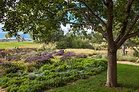 Backyard lawn transition to prairie garden; Scripter garden, Colorado; design Lauren Springer Ogden