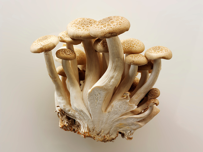 Raw  fresh organic Hon-Shimeji mushrooms