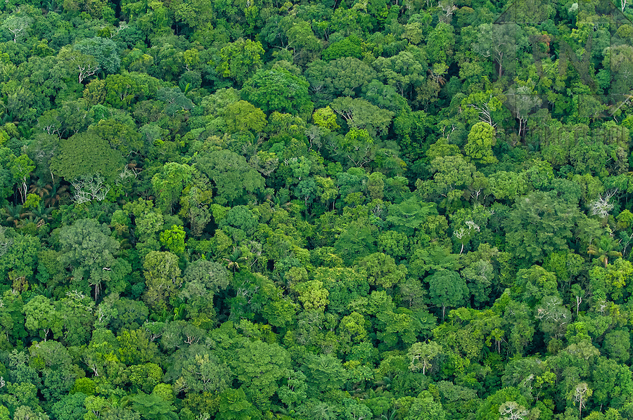 Vista a&eacute;rea da Floresta Amaz&ocirc;nica | Aerial view of the Amazon Rainforest <br /> <br /> LOCAL: Manaus, Amazonas, Brasil <br /> DATE: 01/2009 <br /> &copy;Du Zuppani