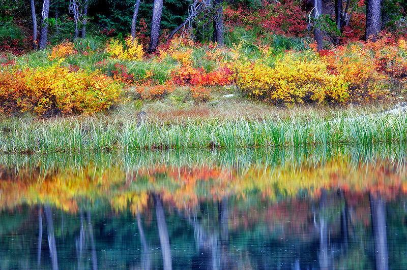 Fall color on banks of Scott Lake. Central Oregon