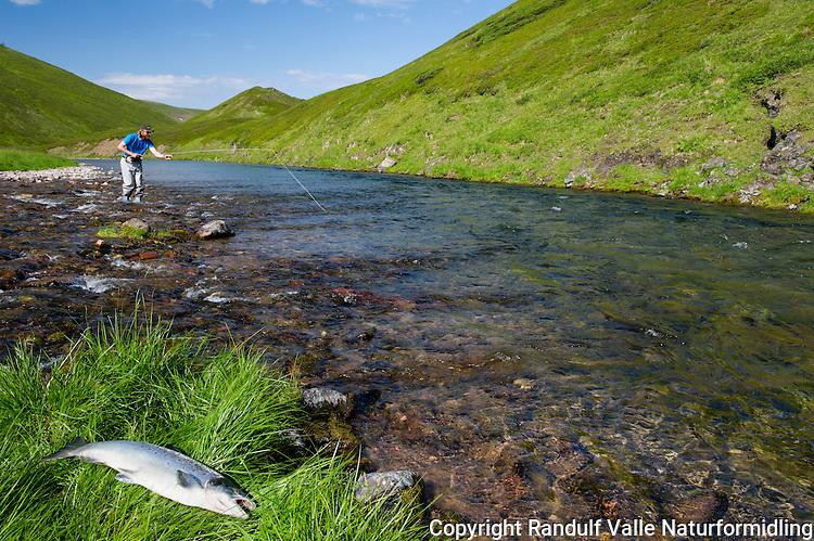 Mann fisker med flue i Sandfjordelva i Varanger. ---- Man fly fishing in Sandfjordelva in Finnmark.