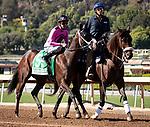 ARCADIA, CA: October 06: #5 Bulletproof One with jockey Edwin Maldonado before the Speakeasy Stakes at Santa Anita Park on October 06, 2019 in Arcadia, California (Photo by Chris Crestik/Eclipse Sportswire)