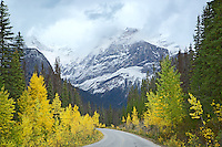 Autumn color at Emerald Peak in Yoho National Park