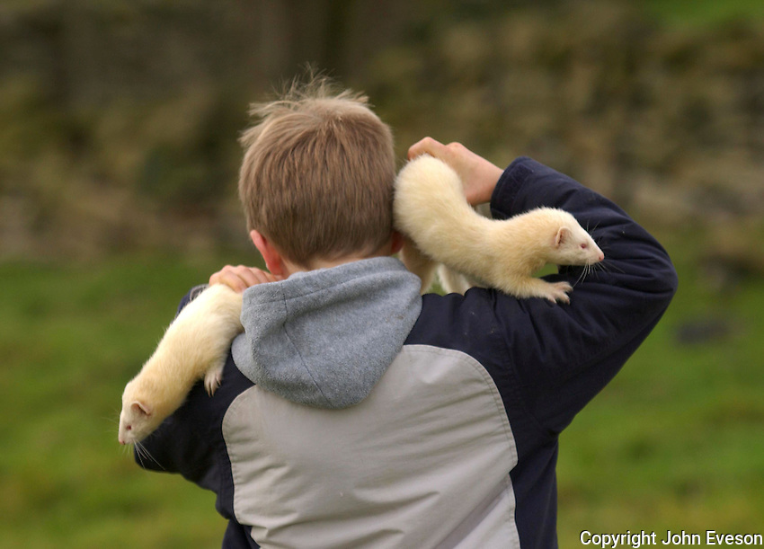 Boy walking away with two ferrets.