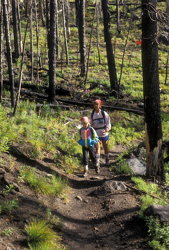 AJ3573, Yellowstone National Park, hiking, Wyoming, Yellowstone, Mother and daughter backpack through the forest that was destroyed by the fire of 1988 in Yellowstone National Park in the state of Wyoming. Lush green undergrowth is starting to grow amongst the devastation.
