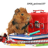 Xavier, ANIMALS, REALISTISCHE TIERE, ANIMALES REALISTICOS, photos+++++,SPCHGUINEA127,#A#, EVERYDAY ,funny