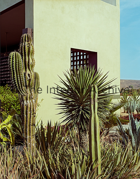The exterior wall of the covered terrace is painted a subtle grey-green creating an effective backdrop for a collection of cacti and palms