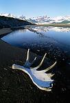 Moose rack, Alsek River, Alaska